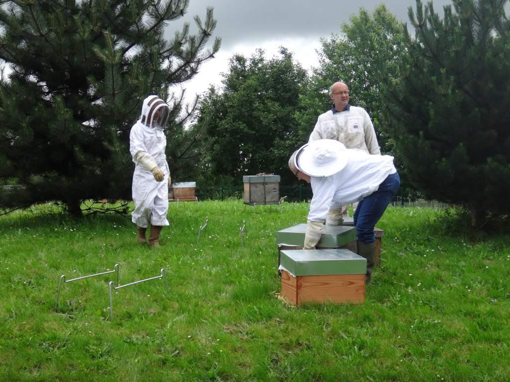 Ouverture des portes des ruches