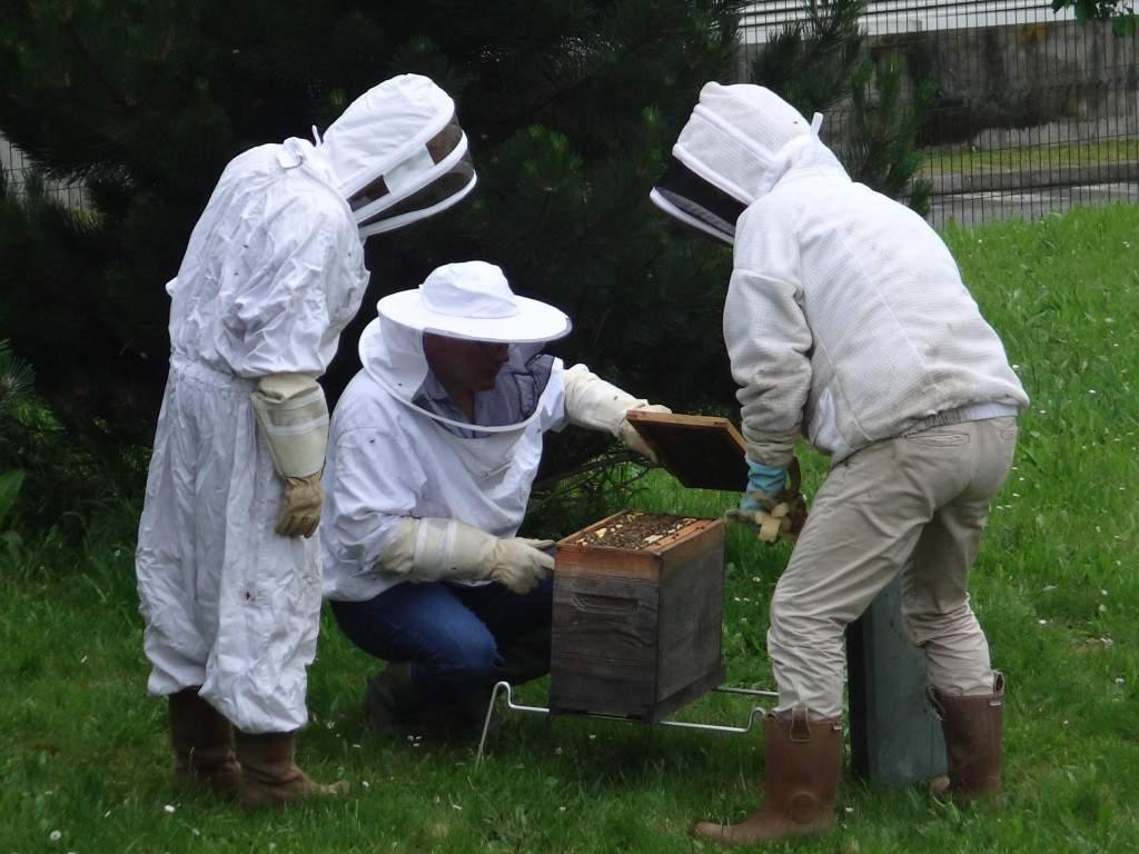 « Une abeille qui sort de la ruche peut atteindre 30 km/h », explique l'apiculteur.  Les salariés n'ont pas encore pu approcher de trop près les ruches.